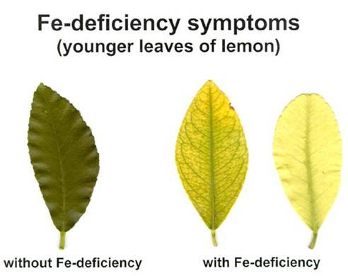 Nutritional disorders in plants pdf
